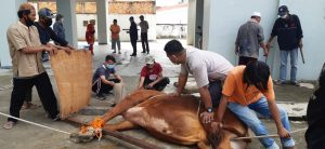 Hari Raya Idul Adha 1442H/2021, Yayasan Indo Global Mandiri Kurbankan 5 Ekor Sapi